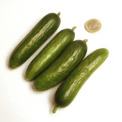 Mini pepino