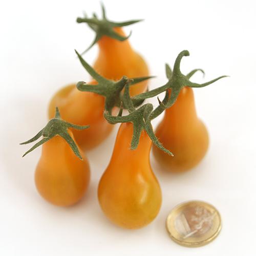Tomate Operino